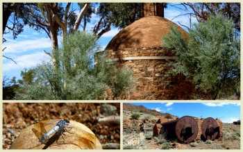 Tag Along Tours Northern Flinders Ranges Arkaroola