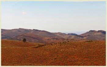 Chase Range Web Flinders Ranges